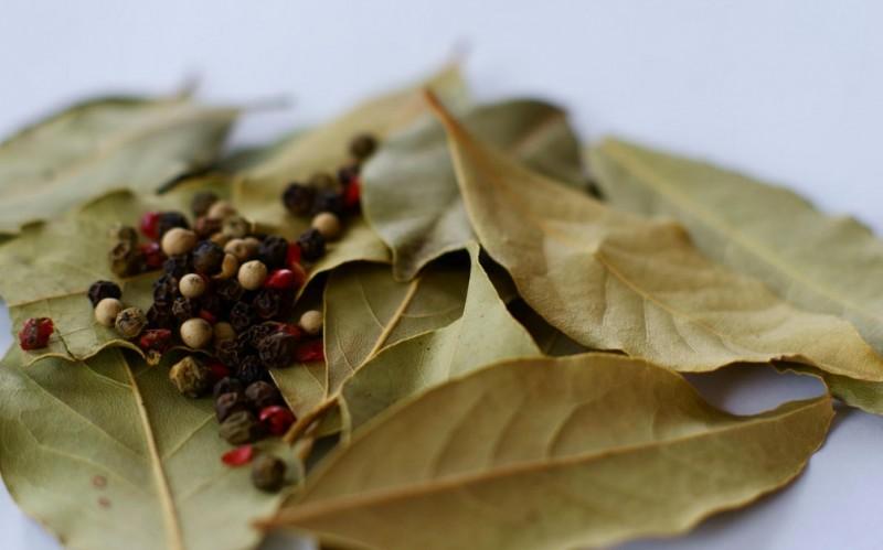 [Bien-Être] Voici 13 choses que vous ignoriez sur les feuilles de laurier !